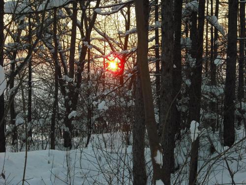 zachód słońca #ZachódSłońca #las #zima