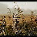 #jesień #łąka #pajęczyny #przyroda
