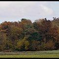 #jesień #pajęczyny #łąka