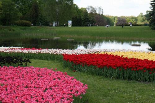 Tulipany #OgródBotaniczny
