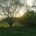 Jest takie miejsce... #widok #piękne #drzewa #słońce #natura