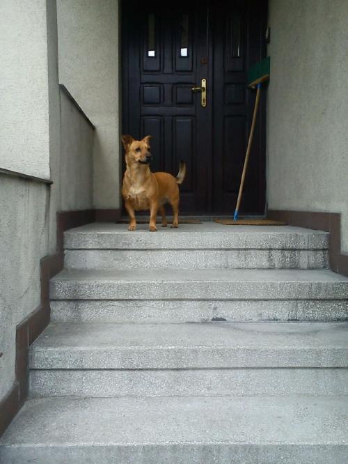 i znowu na schodach :-)