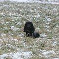 #boisko #Luna #łąka #pies #śnieg #zima