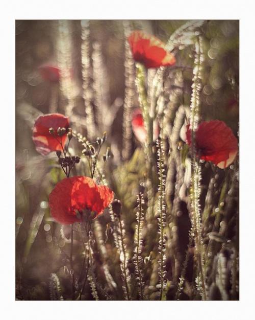 Latem....zapachem łąk i promieniem słońca...