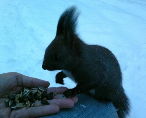 Poranek:-) #WiewiórkiZwierzęta