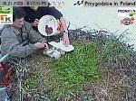 http://images50.fotosik.pl/136/eab64bb1d67239f1m.jpg