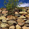 #Mur #kamień #drzewo #niebo
