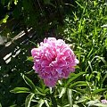 różne #kwiaty #owady #owoce #przyroda #święta
