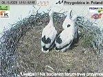 http://images50.fotosik.pl/144/90d7b3cd5536c558m.jpg