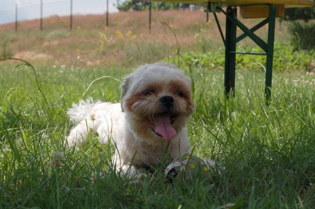 Karpet - pies maskotka zjazdu ze swoją ulubioną piłeczką.