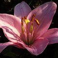 #kwiat #ogród #kolor #natura