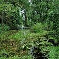 #siemiatycze #bug #PrzełomBugu #rzeka #drohiczyn #korczew #olendry #podlasie #bużyska