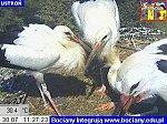 http://images50.fotosik.pl/171/233bb855f1e70c35m.jpg