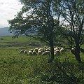 #owce #owieczki #barany #baranki