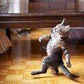 śmieszne zdjęcia #ŚmieszneZdjęcia #humor #rozrywka #śmiech