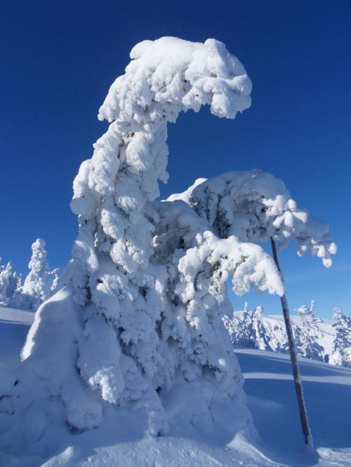 Pani Zima już wiekowa odchodzi o lasce,do widzenia :)) #koniec #wiosna #zima