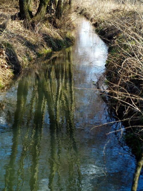 W rowie po roztopacz #drzewa #niebo #odbicie #wiosna #woda