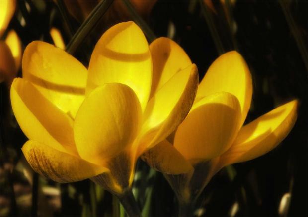 Wiosennie:) #evasaltarski #kwiatek #wiosna