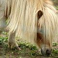 Kucyk #Kucyk #Borysewo #Łódź #ptaki #safari #zoo