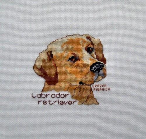 dla Daniela, k. 858 #pies #HaftKrzyzykowy #labrador