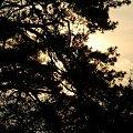 drzefko :D #drzewo #niebo #słonce #siemiatycze