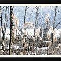 Kilka namalowanych...jesienne, chociaż wiosenne szuwary nad jez.Otomino #obrazy #malowane #MojePrace #szuwary