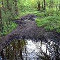 Puszcza Kampinoska-pierwsza kąpiel #PuszczaKampinoska #błoto #UroczyskoKalisko