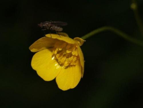 #przyroda #kwiaty #owady #makro