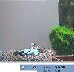 http://images50.fotosik.pl/321/0cb48878a9218836m.jpg