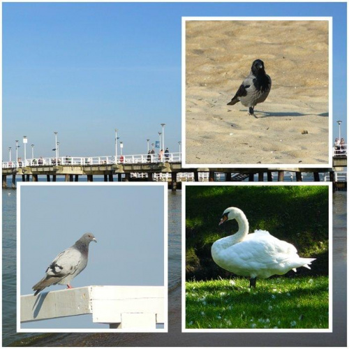 W ostatnim dniu lata... #ptaki #molo