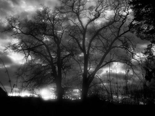 Drzewa w parku - NIE PHOTOSHOP #mroczne #drzewo #drzewa #chmury #CzarnoBiałe #miejsce #park