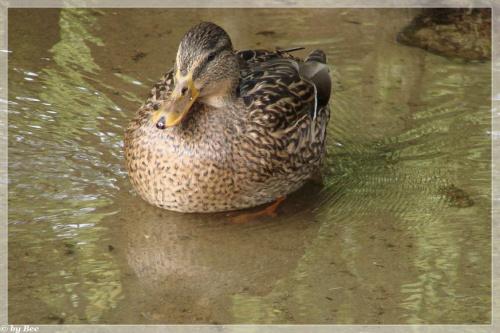 #kaczki #woda