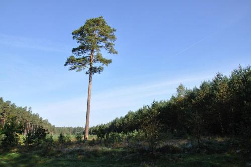 Samotnie... #las #drzewo #przyroda #zieleń