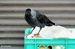 http://images50.fotosik.pl/357/2e28e1c76f19b887m.jpg