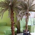 sztuczne palmy sztuczna palma na wymiar pod zamówienie 48 888 216 887 #PalmaSztuczna #SztucznePalmy #WystrójHawajski #wynajem #sprzedaż #latino