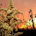 Jesienna łąka o zachodzie słońca #Jesień #łąka #ZachódSłońca #trawy #grudzień