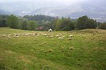 images50.fotosik.pl/381/2d5e575b5b5f0e92m.jpg