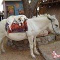 #koń #pies #sen #śpi #koniu