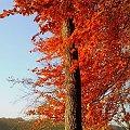 #jesień #drzewo #liść #liście #sorux