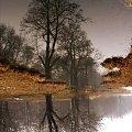 #przyroda #drzewo #woda #odbicie