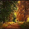 Droga do Pobiednej #jesień #KrajobrazyIPrzyroda #miejsca