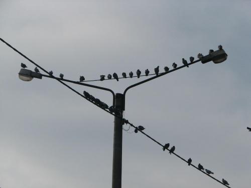 uptaszona latarnia #ptaki #latarnia #łódź #lodz