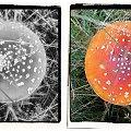 filmowy kadr...a gdyby tak na grzyby popatrzeć okiem artysty? #collage #grzyby #jesień #inaczej #muchomory #KadrZFilmu