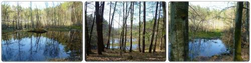 Na bagnach, tam gdzie żurawie! #bagna #las #mokradła