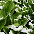3 maj 2011, piękną zimę mamy tej wiosny :) #zima #wiosna #śnieg #sanki #biało #mróz #ulewa #białe #krajobrazy #Śląskie #slaskie #Górny #Śląsk #gorny #slask #Racibórz #raciborz