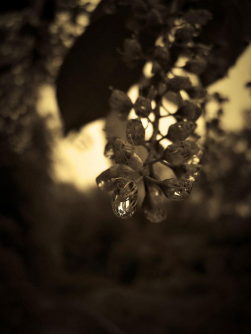 łzy natury #natura #przyroda #ficiol007