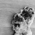 #pies #zwierzeta