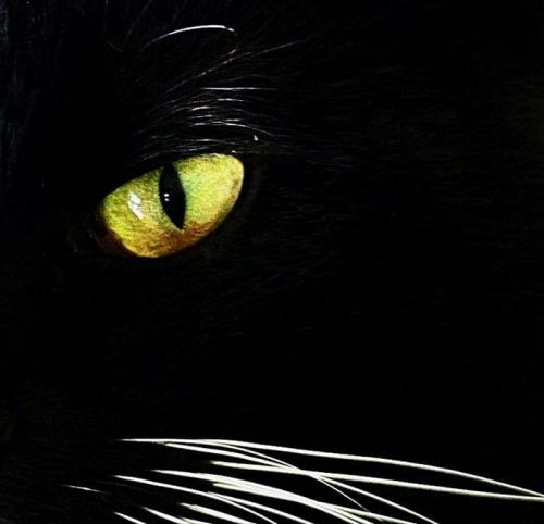 mam na Was oko ;) #kot #oko #zwierzeta