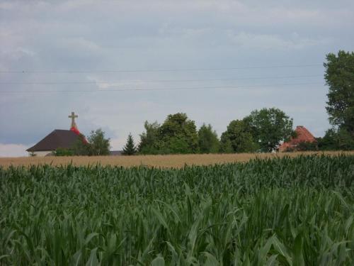 Foto: R.Kaczmarek - Sokolniki Wielkie; widok od strony wsi Czyściec. #architektura #GminaKaźmierz #PowiatSzamotulski #przyroda #rolnictwo #SokolnikiWielkie #wieś #widoki