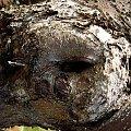 #drzewo #kora #natura #przyroda